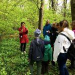 Kräuterwanderung im Wienerwald