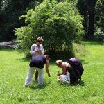 Kräuter auf der Wiese entdecken