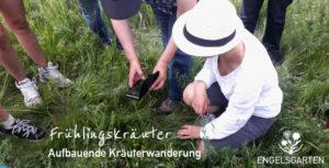 Kräuterwanderung Wien